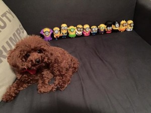 Taffy and her Minions